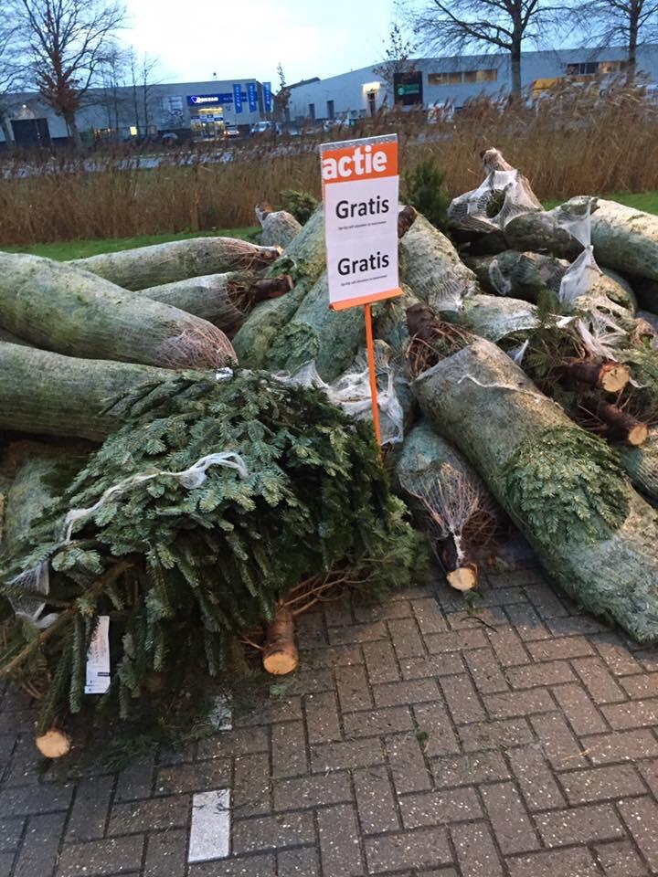 Gratis kerstbomen af te halen GAMMA Hendrik Leeuwarden