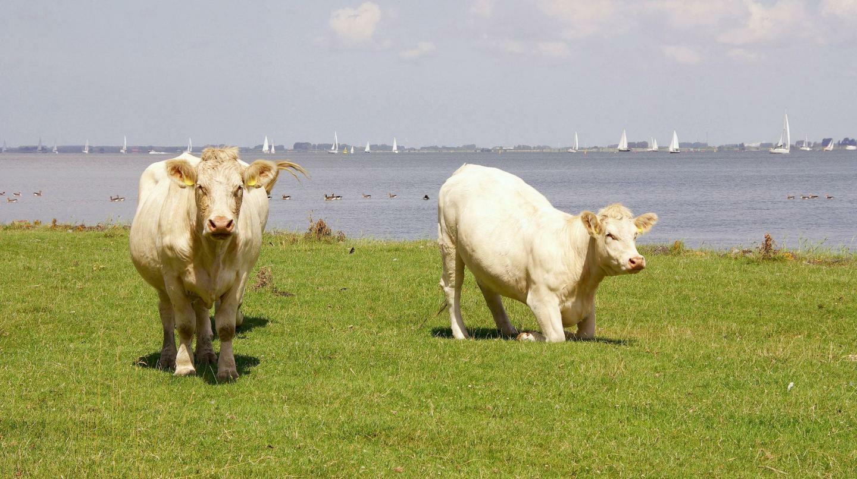Gratis tijdschrift Zuid-Hollands Landschap