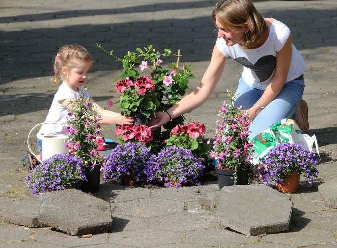 Gratis twee tuinplanten in ruil voor een tegel bij de Intratuin