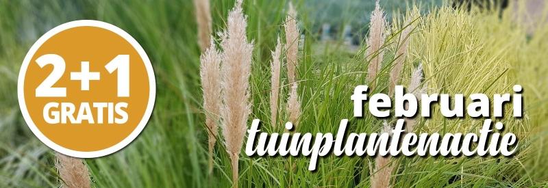 Tuinplantenmaand 2 + 1 gratis bij Groenrijk