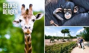 Entree Safari Park Beekse Bergen €14,50 beperkt geldig t/m 23 juni @ Social deal