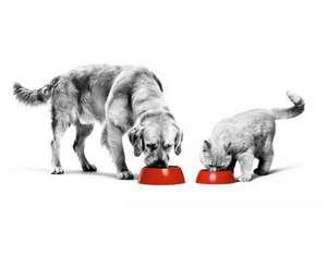 Gratis pakket voor rashond of -kat + €10 CASHBACK ROYAL CANIN® bij aankoop rashonden of -kattenvoeding