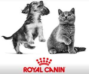 Gratis puppy of kittenpakket van Royal Canin.