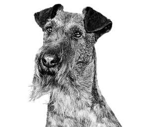 Gratis zak (pouch) Royal Canin
