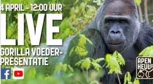 [04/04 12:00] Apenheul streamt live gorillavoederpresentatie @ Facebook/YouTube