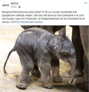 08/05 (vandaag) 11:00 Artis streamt live babyolifantje voor eerst naar buiten @ Facebook/Insta