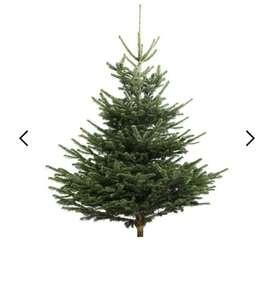 Nordmann-Spar Kerstboom 125-150cm cm - zonder Kluit!
