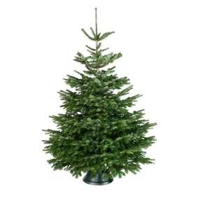 Gratis echte kerstboom (praxis Duiven)