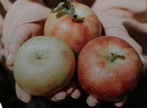 5 kilo appels €4 TGTG Kesteren