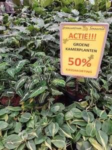 50% korting groene kamerplanten Tuincentrum Sonneveld