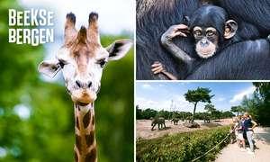 Safaripark Beekse Bergen met korting