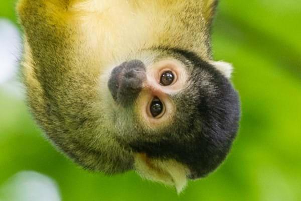 'Early Monkey' korting op seizoenskaarten voor Apenheul @ Apenheul