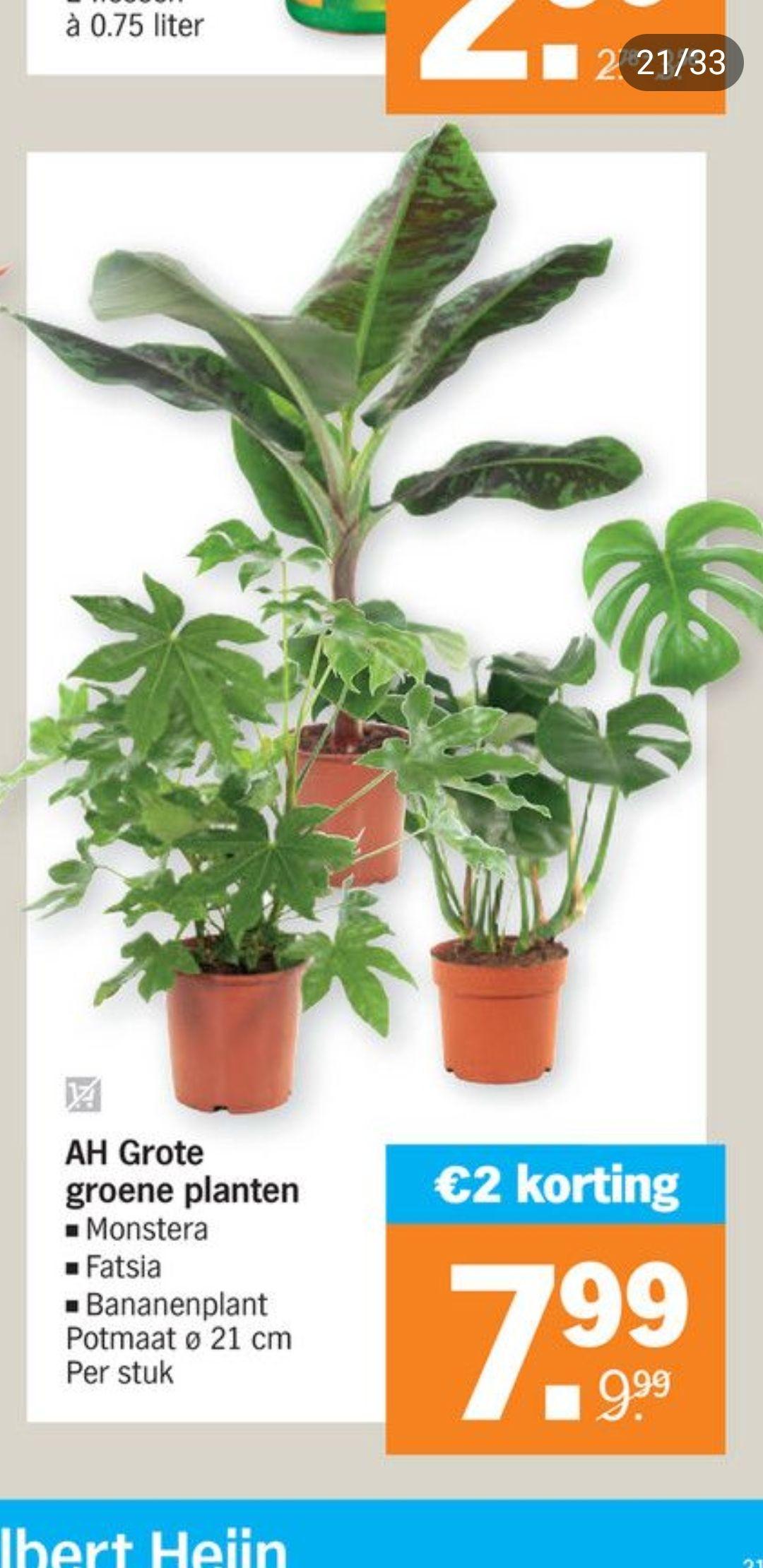 Grote groene planten bij AH
