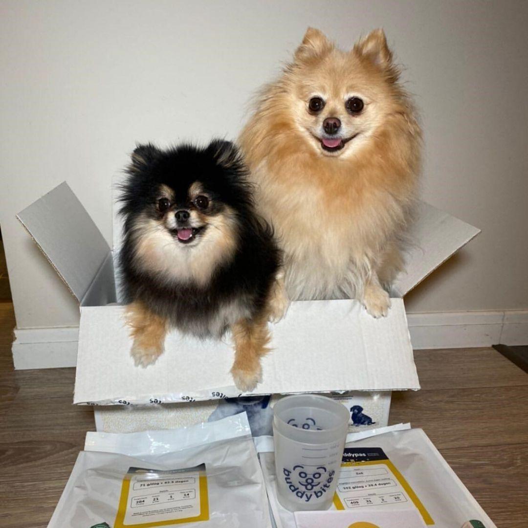 Gepersonaliseerd 9 kilo hondenvoer gratis