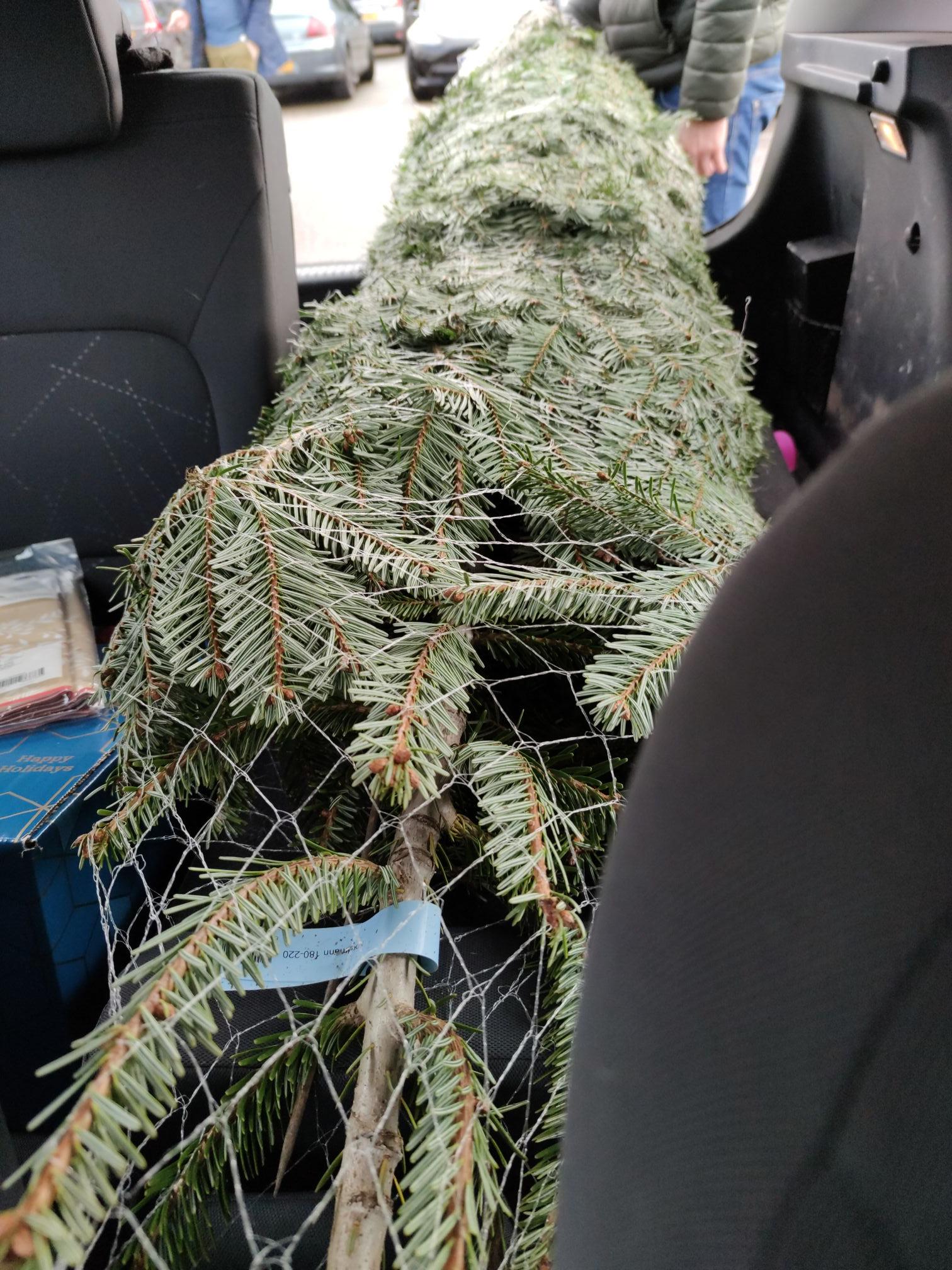 Gratis kerstboom bij de Makro.