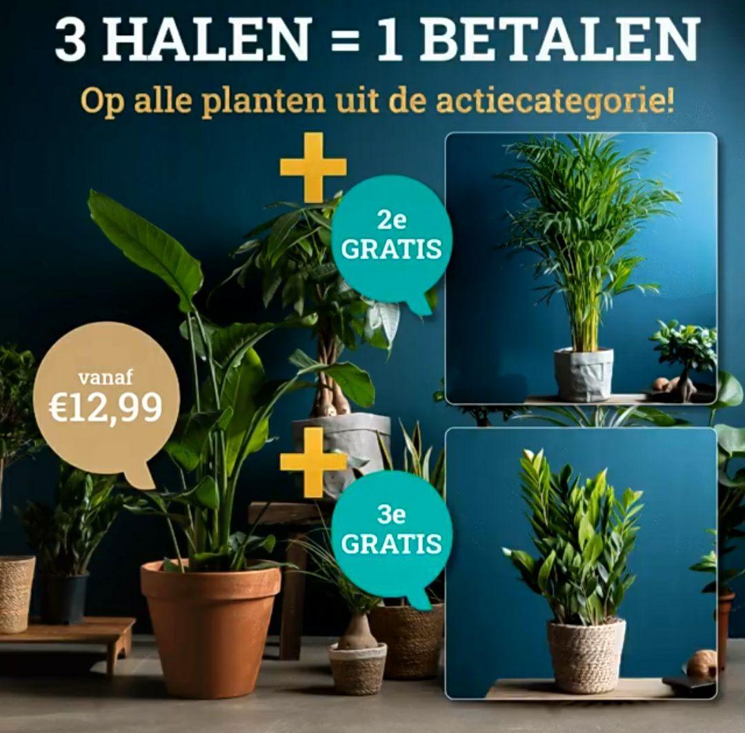 Planten bij woonq.nl 3 halen 1 betalen