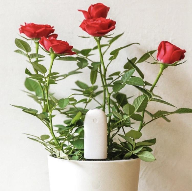 Xiaomi Mi Flower Care Plant Sensor