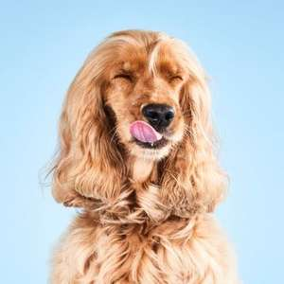 1 maand hondenvoer gratis (€2 verzendkosten) @ Tails.com