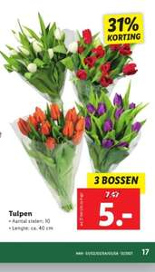 3 Bossen tulpen €5,- Lidl