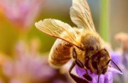 [BELGIE] [West-Vlaanderen] Bloemen voor de bijen