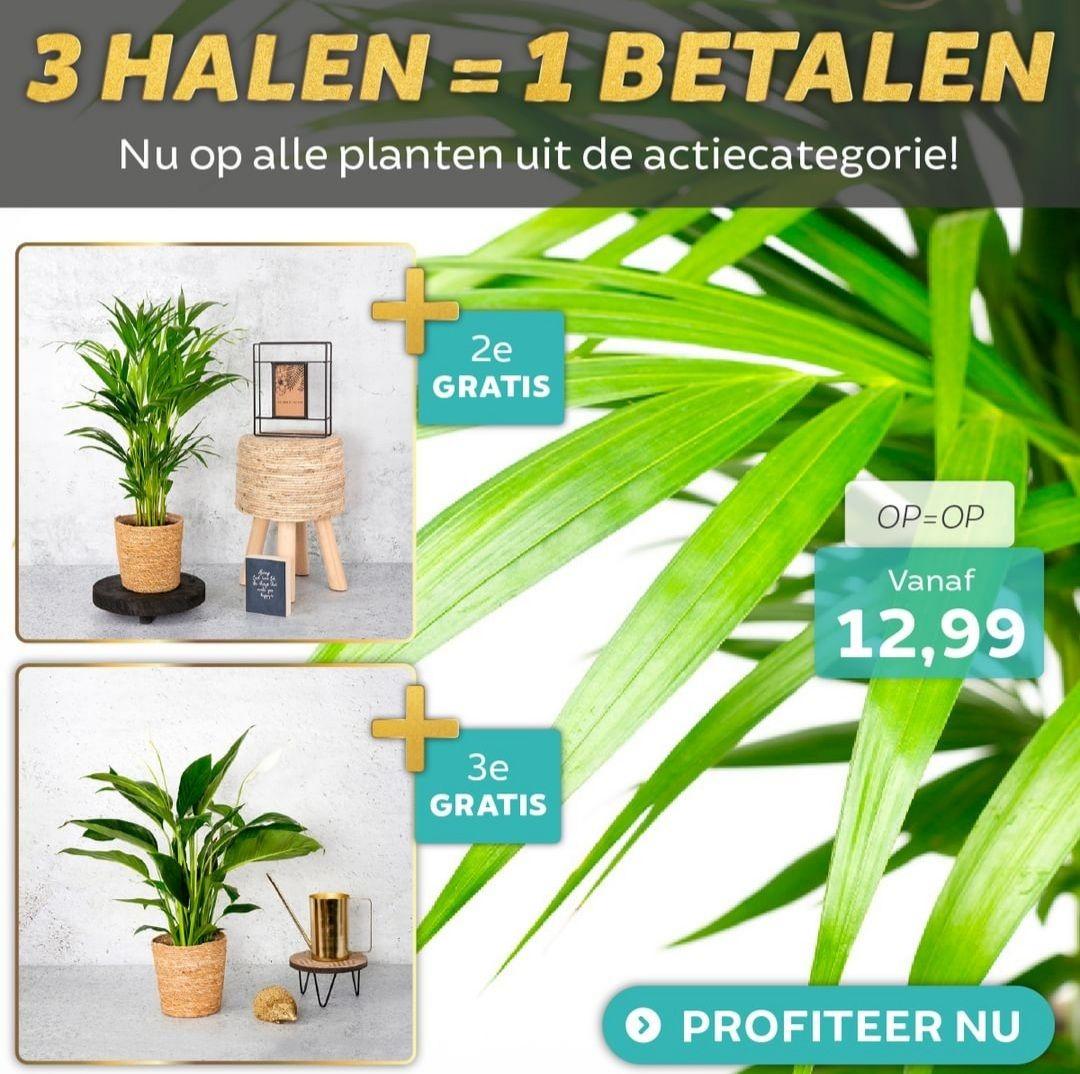 Dekbed discounter 3 planten halen 1 betalen