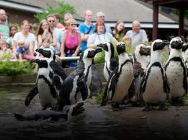 Entree Burgers Zoo tijdelijk €10