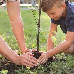 [Lokaal gemeente Leeuwarden] Vraag een gratis boom aan ( 365 bomen beschikbaar, op is op)