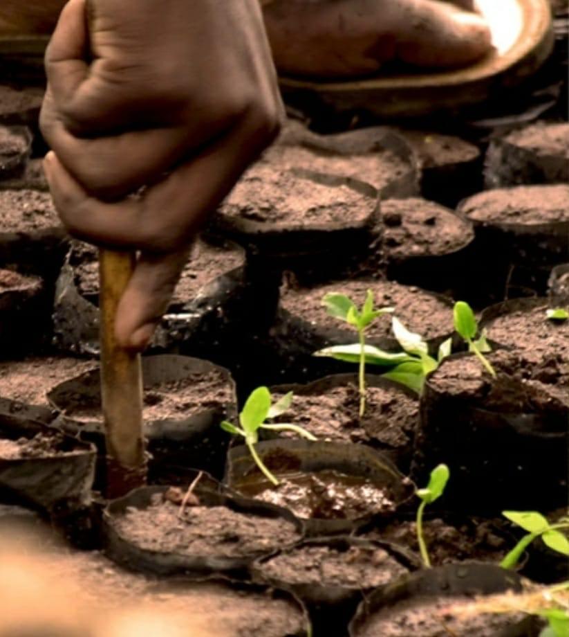 Plant een gratis boom