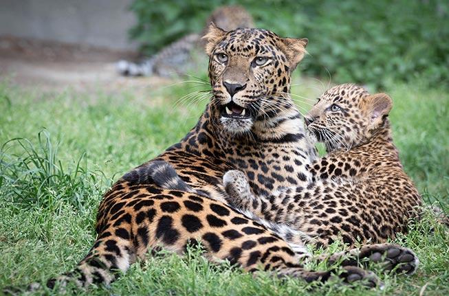Bezoek de dierentuin Pakawi Park (België) op 3 juli 2021 en ontvang een gratis retourticket!