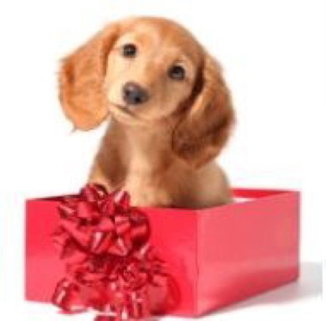 Gratis RoyalCanin Puppypakket @ RoyalCanin