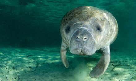 Burgers Zoo entree ticket van 22 euro voor 14,90 euro @Groupon Duitsland