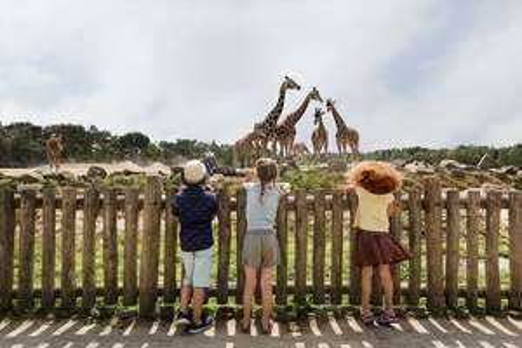 Entreeticket Safaripark Beekse Bergen @ ActieVanDeDag