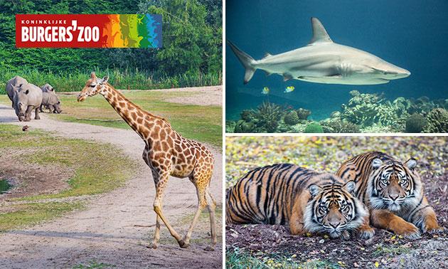 Gehele dag entree voor Burgers' Zoo voor € 16