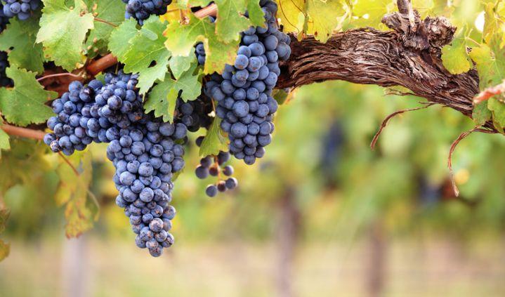 Na handig trucje 6 flessen POS Cabernet wijn + 20 euro cadeaubonnen voor meer wijn voor €29,64!